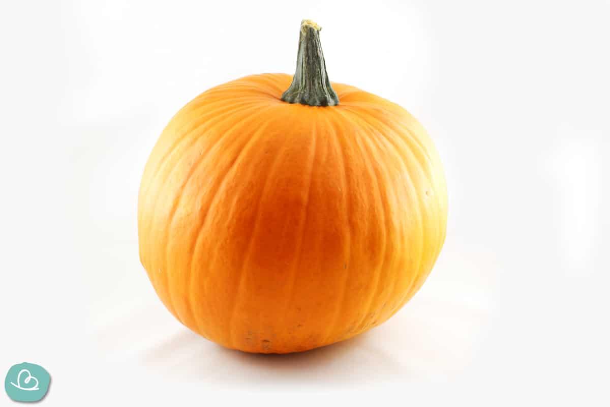 Idealer Halloween-Kürbis: Jack O'Lantern