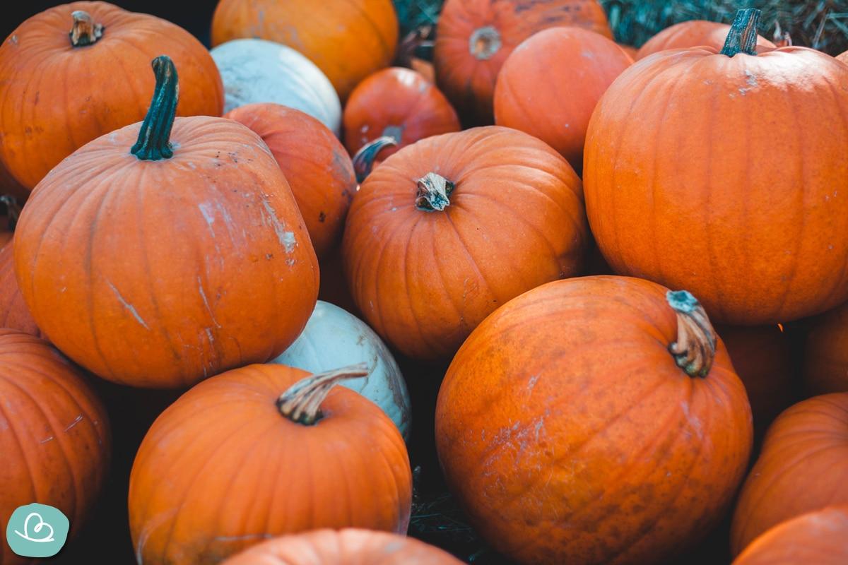 Klassiker Halloween Kürbis