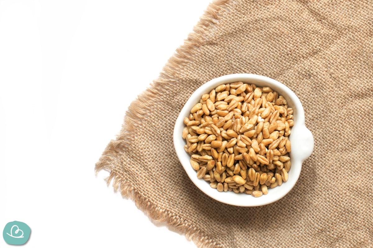 Weizen Füllung für Körnerkissen