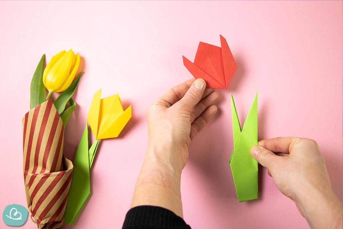 Tulpenblüte und Stiel