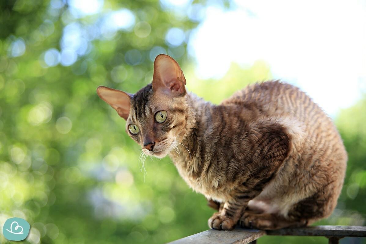 Katzen für Allergiker