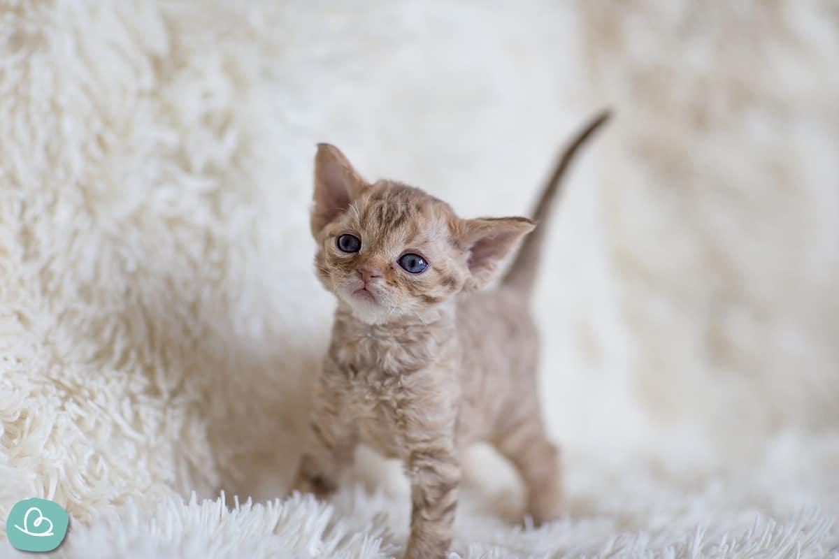 Süße kleine Katze auf einem weißen Teppich.