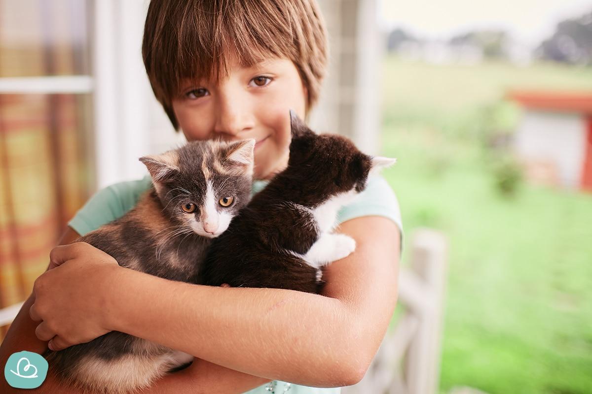 Junge hält zwei kleine Katzen in der Hand.
