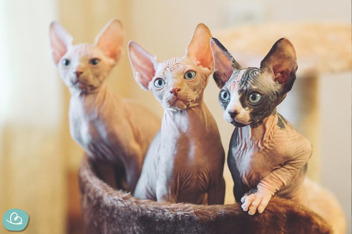 Allergien Katze