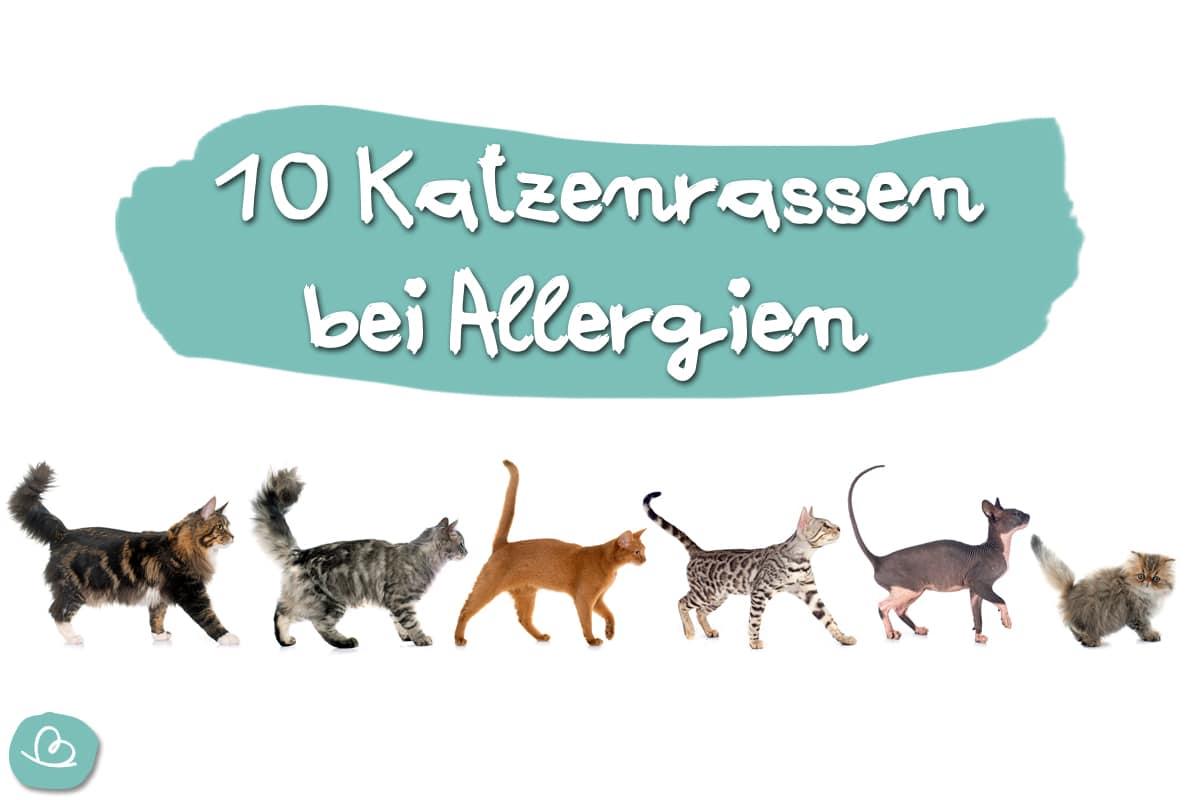 Katzen für Allergiker: 10 Katzenrassen bei Allergien