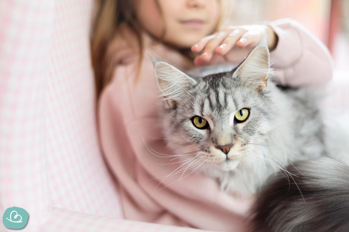 Haustier zum Kuscheln - Katze.